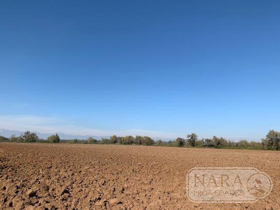 Se vende excelente parcela agrícola 9,40 ha en Pelarco
