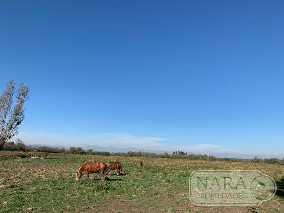 Se vende excelente parcela agrícola 17,73 ha en Pelarco