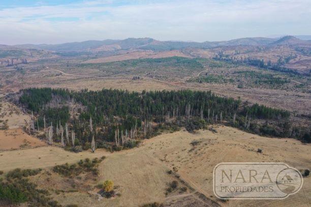Se vende fundo de 110,16 hectáreas, San Javier